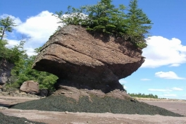 Bay-of-Fundy-Tour-2008-ACC-0011