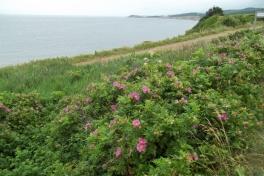 Cape-Breton-Island-Tour-2014-ACC-0110