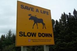 Newfoundland-Tour-2011-ACC-0021