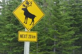 Newfoundland-Tour-2012-ACC-0009