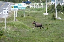Newfoundland-Tour-2012-ACC-0023