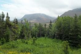 Newfoundland-Tour-2014-ACC-0013