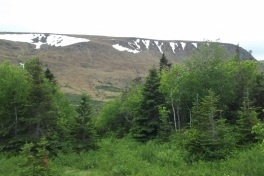 Newfoundland-Tour-2015-ACC-0014